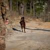 Military Police Detachment K9 Dog Handler training