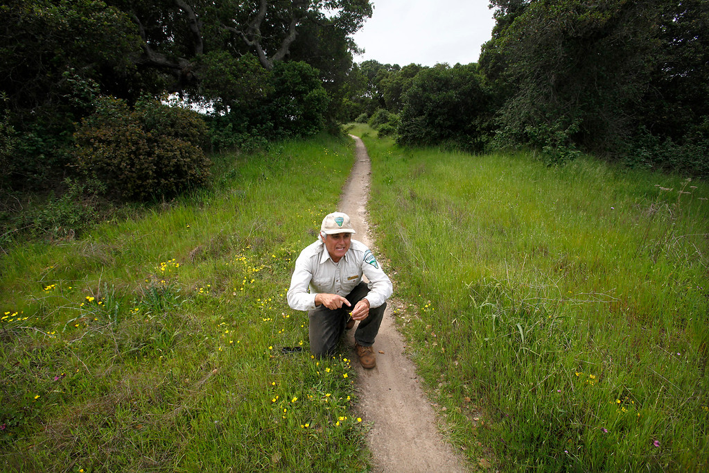 . Bureau of Land Management botanist Bruce Delgado stops to look at wildflowers on the Bureau of Land Management area of Fort Ord on Wednesday, April 5, 2017.  The above average rainfall in Monterey County has filled the approximately forty-five ponds, lakes and vernal pools to full levels.   (Vern Fisher - Monterey Herald)