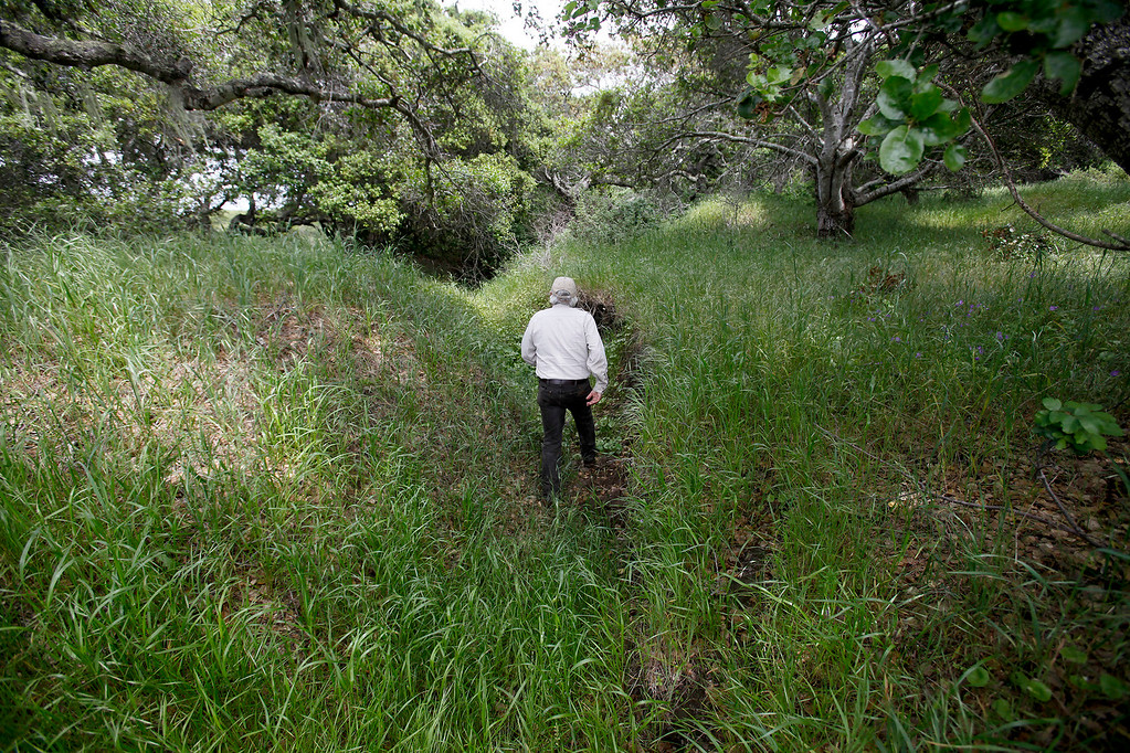 . Bureau of Land Management botanist Bruce Delgado walks through old Army fox holes dug during training on the Bureau of Land Management area of Fort Ord on Wednesday, April 5, 2017.  The above average rainfall in Monterey County has filled the approximately forty-five ponds, lakes and vernal pools to full levels.   (Vern Fisher - Monterey Herald)