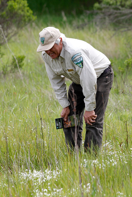 . Bureau of Land Management botanist Bruce Delgado looks over a field of hickman\'s popcorn flower near a vernal pond on the Bureau of Land Management area of Fort Ord on Wednesday, April 5, 2017.  The above average rainfall in Monterey County has filled the approximately forty-five ponds, lakes and vernal pools to full levels.   (Vern Fisher - Monterey Herald)