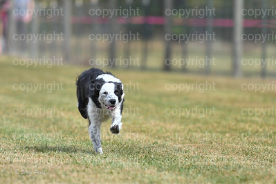 fast (693 of 1695)
