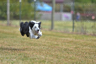 fast (699 of 1695)