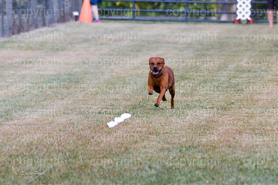 fast (1254 of 1695)