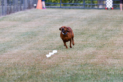 fast (1255 of 1695)
