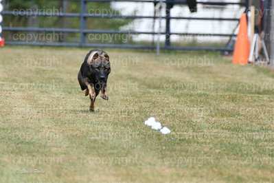 fast (1209 of 1695)