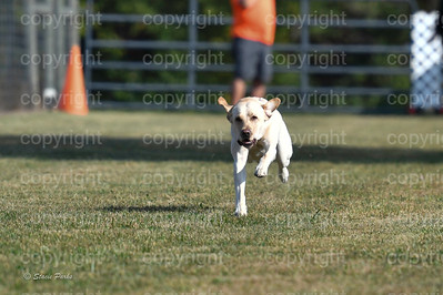 fast (267 of 1695)