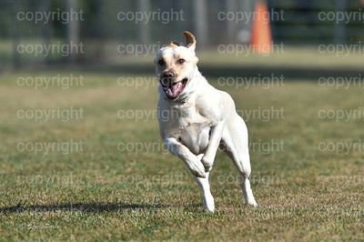 fast (274 of 1695)