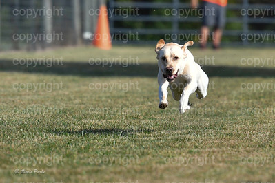 fast (268 of 1695)