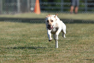 fast (270 of 1695)