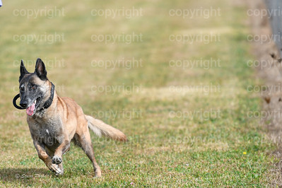 fast (447 of 1695)