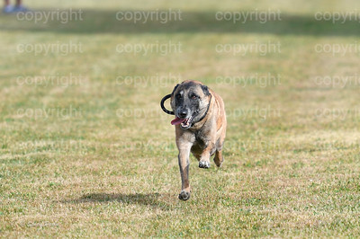 fast (439 of 1695)