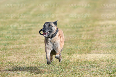 fast (443 of 1695)