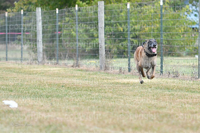 fast (576 of 1695)