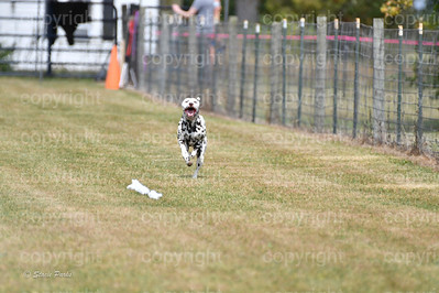 fast (1494 of 1695)