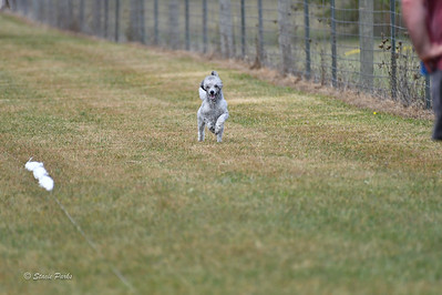 fast (1673 of 1695)