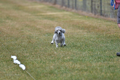 fast (1684 of 1695)