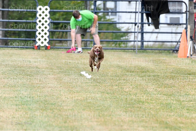 fast (1075 of 1695)