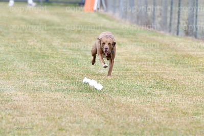 fast (1077 of 1695)