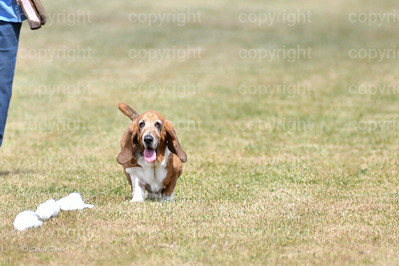 fast (1466 of 1695)