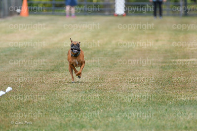 fast (1474 of 1695)