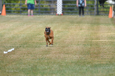 fast (1469 of 1695)