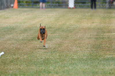 fast (1475 of 1695)