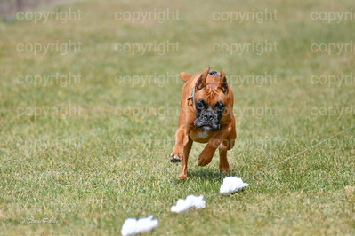 fast (1484 of 1695)