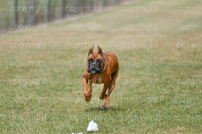 fast (1479 of 1695)