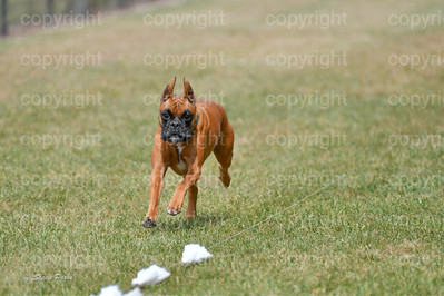 fast (1480 of 1695)