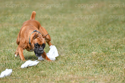 fast (1485 of 1695)
