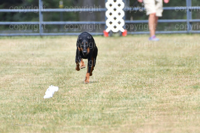fast (1584 of 1695)