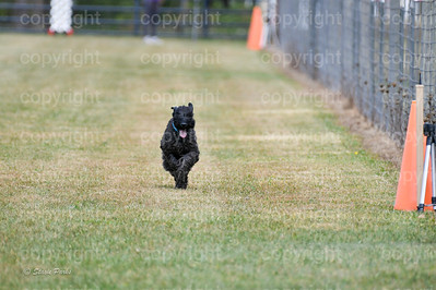 fast (1169 of 1695)