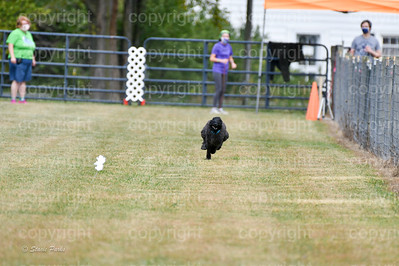 fast (1160 of 1695)