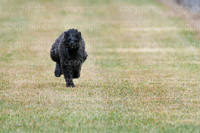 fast (1168 of 1695)
