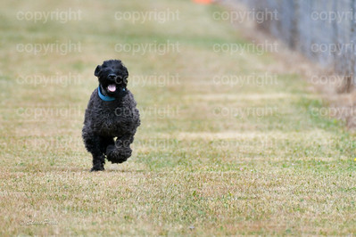 fast (1164 of 1695)