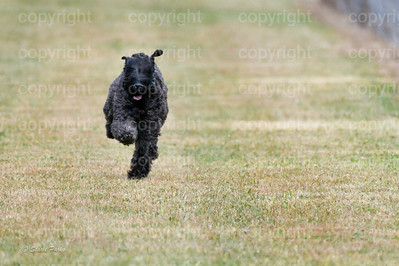 fast (1165 of 1695)