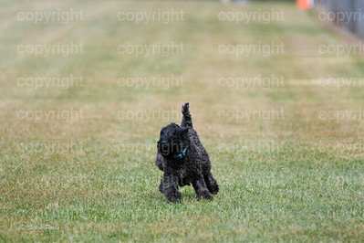 fast (1179 of 1695)