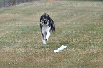 fast (1106 of 1695)