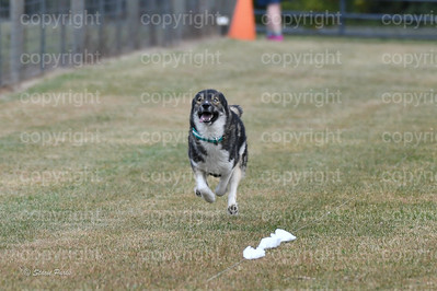 fast (1107 of 1695)