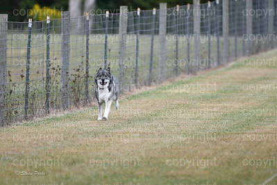 fast (1013 of 1695)