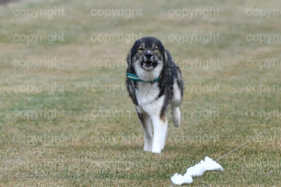 fast (1104 of 1695)