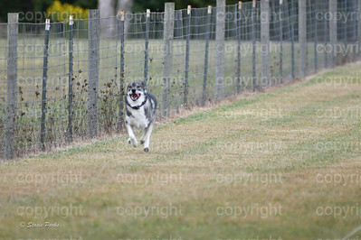 fast (1014 of 1695)