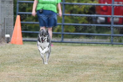 fast (1006 of 1695)