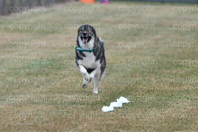 fast (1105 of 1695)