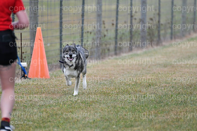 fast (1017 of 1695)