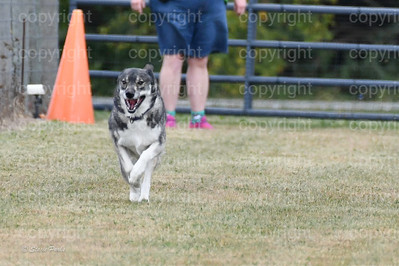 fast (1008 of 1695)