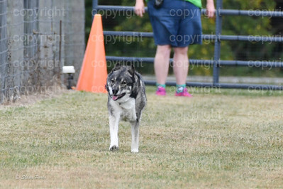 fast (1009 of 1695)