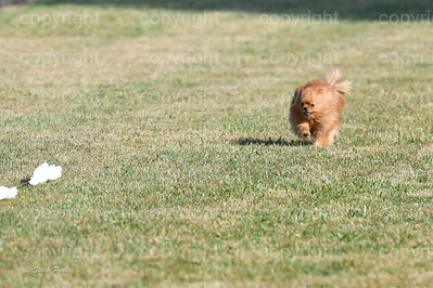 fast (255 of 1695)