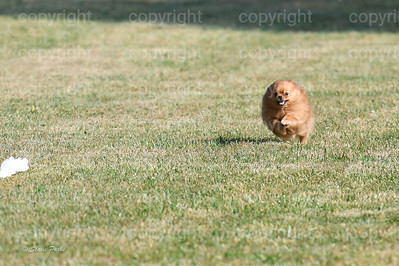 fast (253 of 1695)