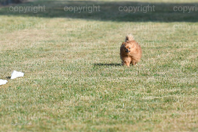 fast (252 of 1695)